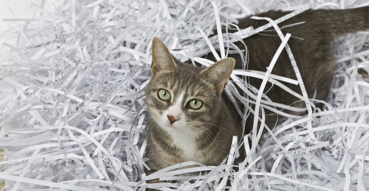 Paper Cat Litter – Not Worth Its Weight