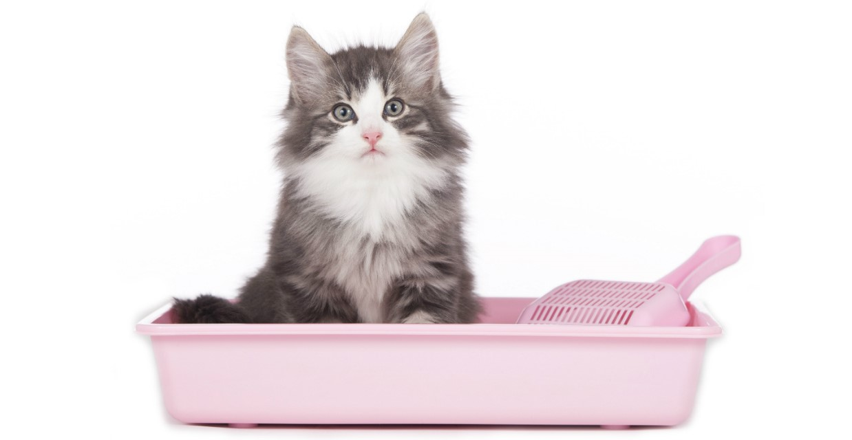 How to choose a cat litter?